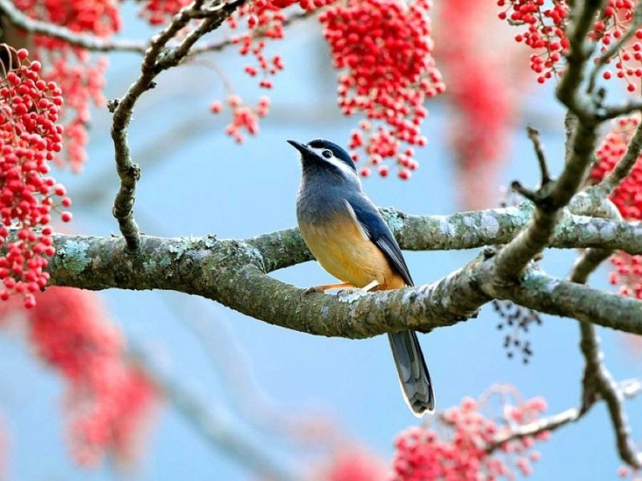 Beautiful birds_20