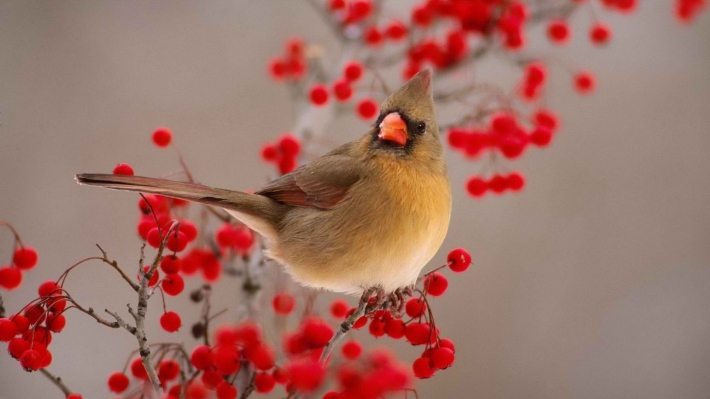 Beautiful birds_23