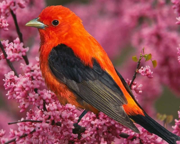 Beautiful birds_32