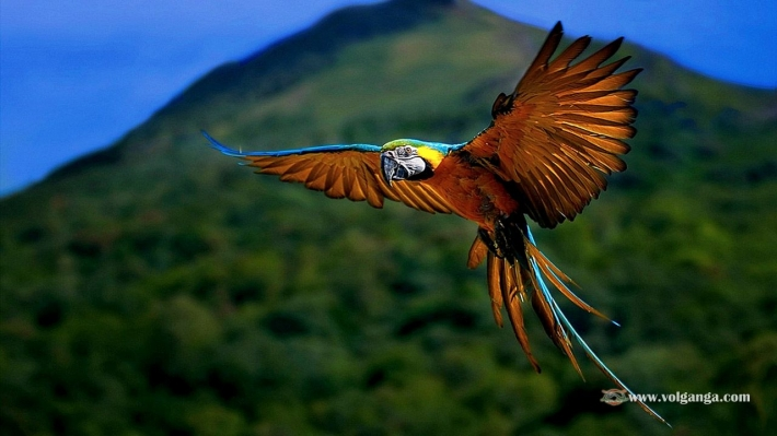 Beautiful birds_64