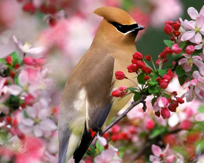 Beautiful birds_55