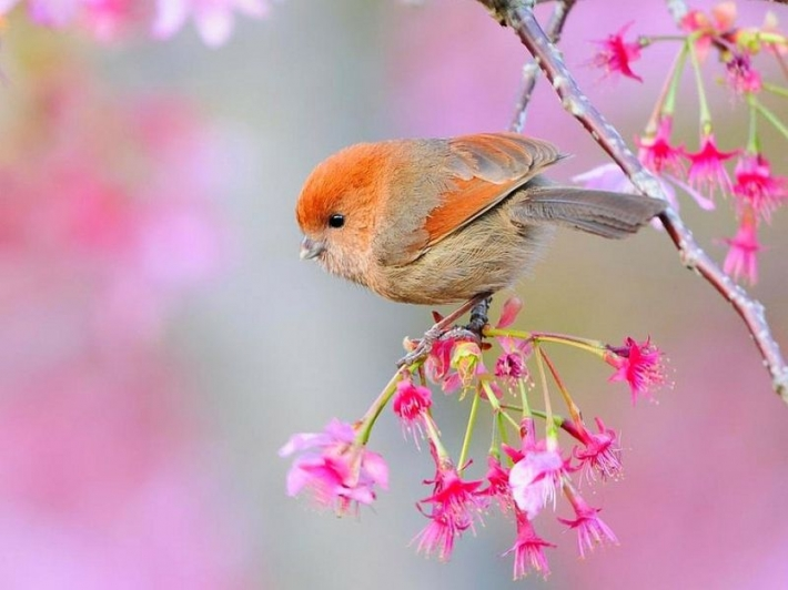 Beautiful birds_63