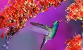 Beautiful birds_10
