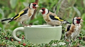 Beautiful birds_11