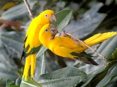 Beautiful birds_1