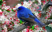 Beautiful birds_21