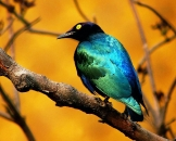Beautiful birds_22
