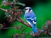 Beautiful birds_29