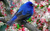 Beautiful birds_37