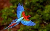 Beautiful birds_40