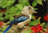 Beautiful birds_45