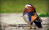 Beautiful birds_47