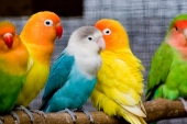 Beautiful birds_48