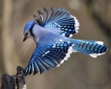 Beautiful birds_62