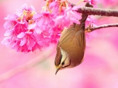 Beautiful birds_65
