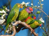 Beautiful birds_75