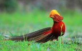 Beautiful birds_77