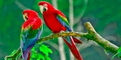 Beautiful birds_79
