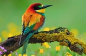 Beautiful birds_80