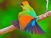 Beautiful birds_81