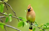Beautiful birds_85