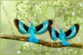 Beautiful birds_92